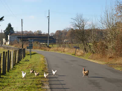 Chickens cross the road in Yviers